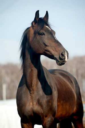 saddle: bay horse