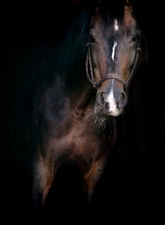 horse on black photo