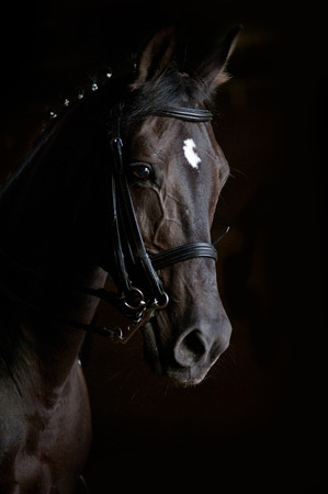 cheval de dressage