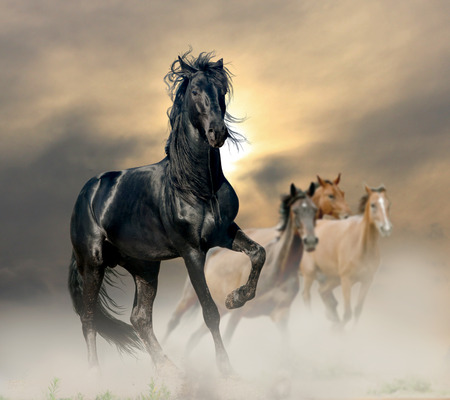 prairie: black stallion Stock Photo