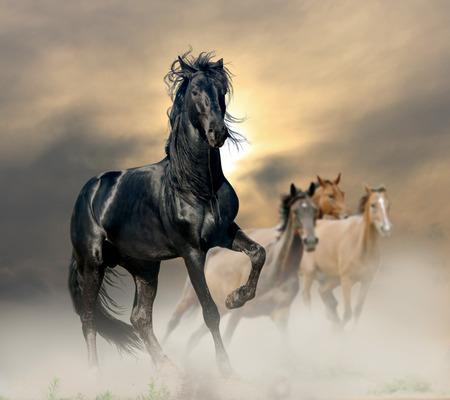 caballo negro: semental negro Foto de archivo
