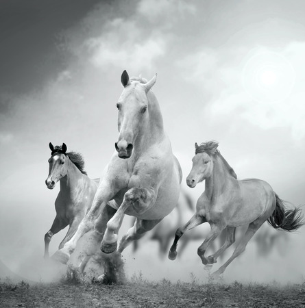 fast forward: horses in dust