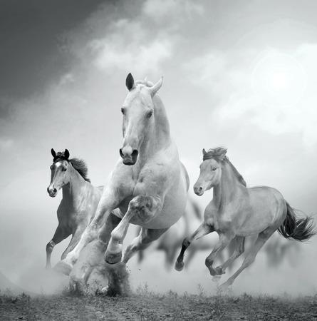 Pferde im Staub Standard-Bild - 29020238