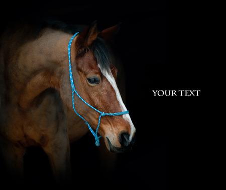 horsepower: horse on black