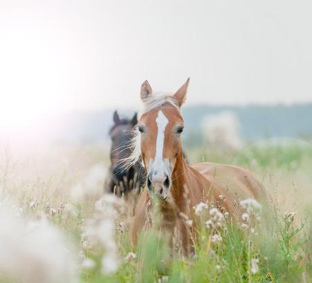 horses in field Standard-Bild