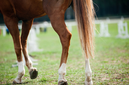 hooves: horse legs Stock Photo