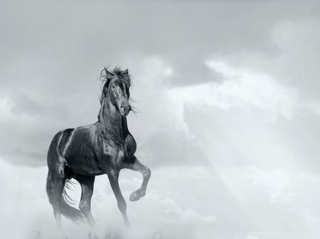 黒い馬 写真素材