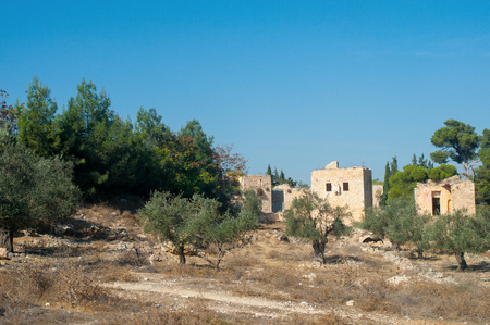 biblical olive trees and house, Palestine