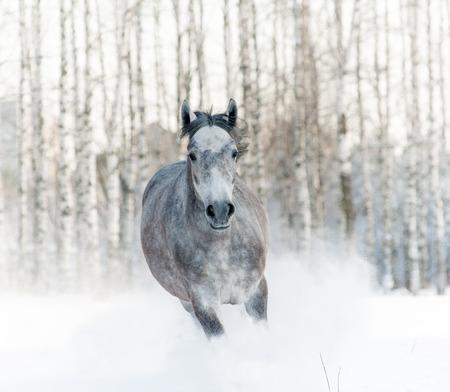 snowdrift: horse in snowdrift