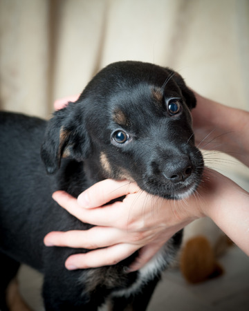 stray dog: puppy in woman hands