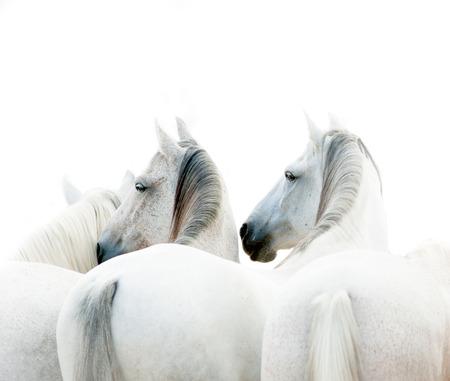 personas corriendo: caballos blancos