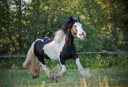 zigeuner paard wandelen Stockfoto