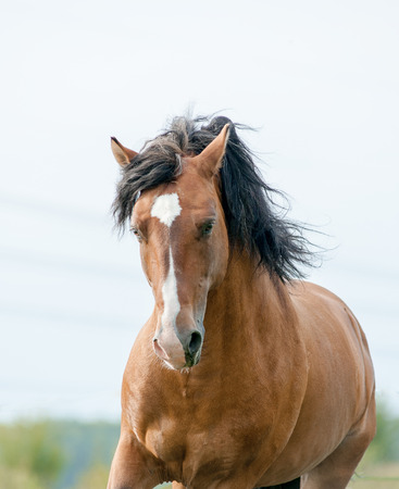 sinlight: mustang horse Stock Photo