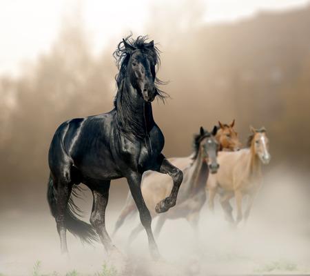 black stallion Banque d'images