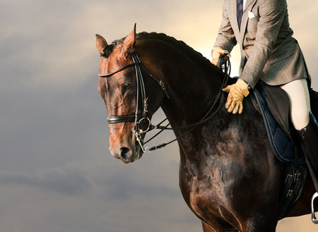 rider on a horse photo