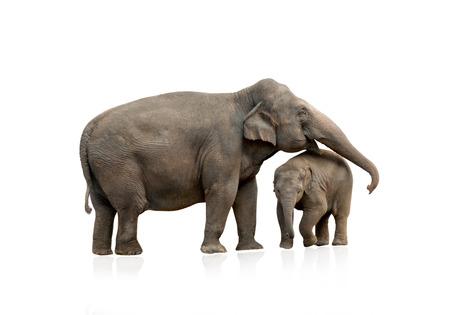 Elephant vrouw met baby geïsoleerde Stockfoto