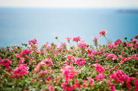 gentle dream vacation: flowers and sea background