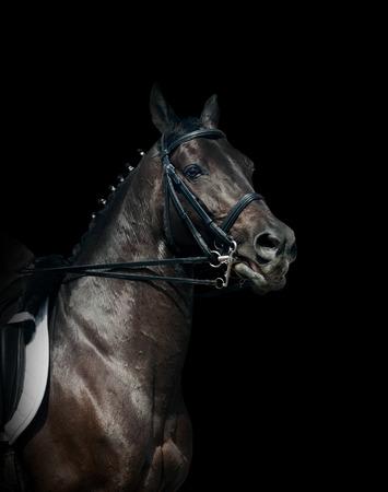 femme a cheval: Cheval de dressage noir Banque d'images