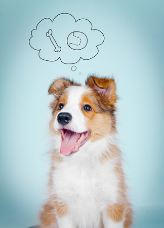 border collie puppy: Positive smiling border collie puppy with thinking bubble Stock Photo