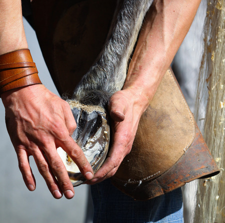 close fitting: blacksmith hands and horse leg Stock Photo