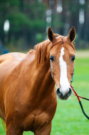embody: Race horse portrait