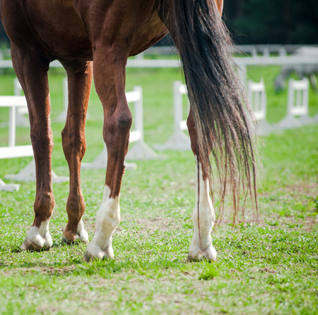 stood up: Horse hooves close up at equestrian events