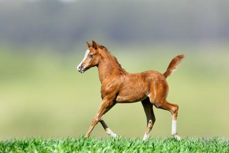 自然に馬します。