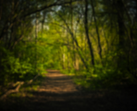 depth: Blurry summer background with road in the deep of forest