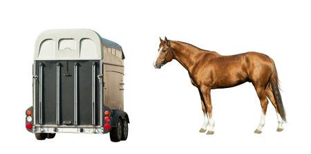 trakehner: Purebred chestnut stallion and trailer isolated over a white