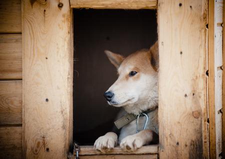 adopt: Sad dog in doghouse waiting