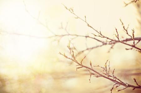 bourgeon: Light soft spring background