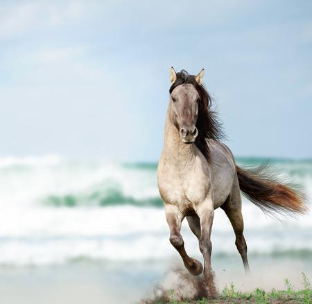 wild stallion running near water Stock Photo