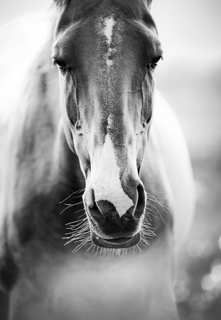 horses in field: horse closeup