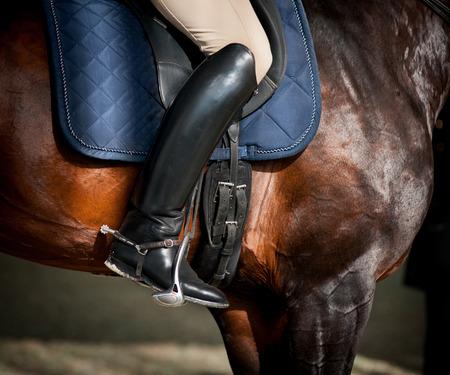 rider on a bay purebred stallion closeup
