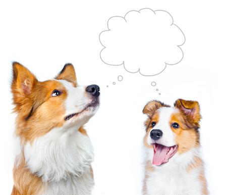Concept: Volwassen border collie en border collie puppy dromen