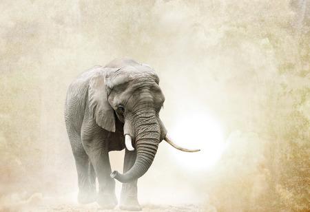 african elephant walking in desert over a grunge background