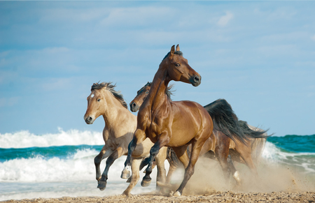 Wild free horses running by the ocean shore with high speed