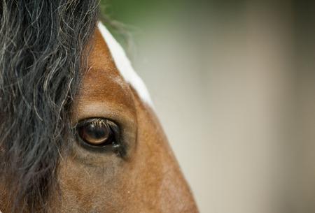 sense of sight: Eye of a wild bay horse close up view Stock Photo