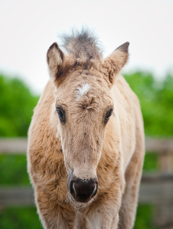paddock: cute foal in paddock frontview Stock Photo
