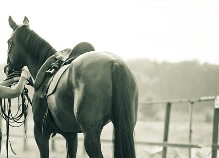 girth: Concept: horse on a training manege in monochromatic tones