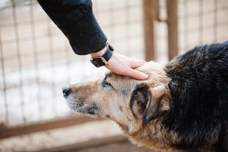 helping: perros y humanos