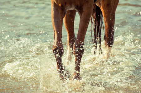 hot day: Horse runs with water splashes in a hot summer day
