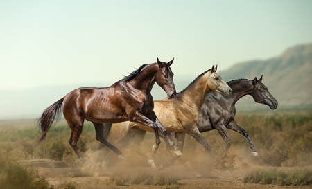 Three beautiful horses in prairies on the wild