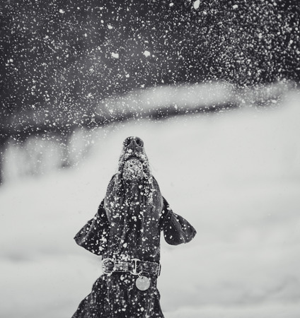 Dog looking up at falling snow in winter