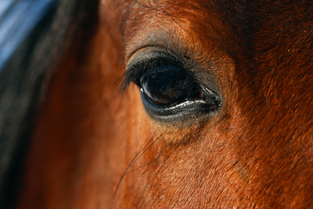 Horse eye close up in winter