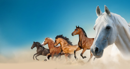 Beautiful horses on the wild against the blue skies Banque d'images - 118784847