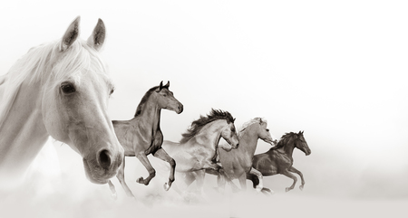 Horses banner with white background space Banque d'images - 118784850