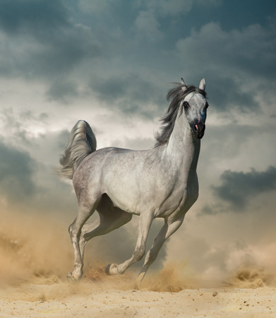 Beautiful arabian horse in desert runninf wild under cloudy sky Banque d'images - 121723862