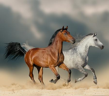 Beautiful horses in desert running wild under stormy skies