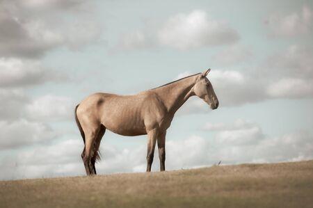 Horse alone in the field, toned image Banco de Imagens